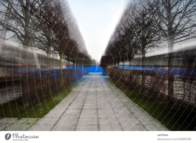 Suction |Avenue in zoom effect trees hedges slabs Concrete slabs off Wall (building) Blue Grass Green Zoom effect Central perspective Vanishing point Symmetry
