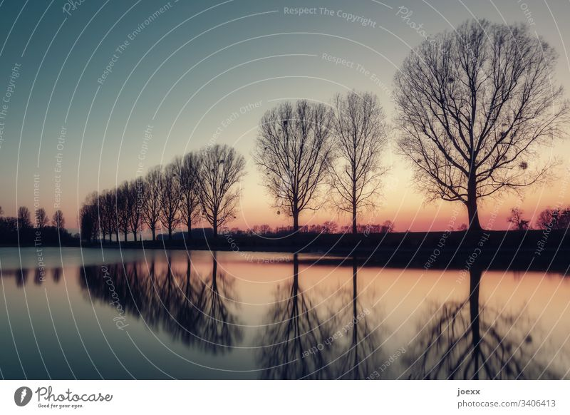 Bare tree row with water reflection Escarpment Water Rhine Nature River Evening Sky Sunset Lake Calm Poplar Relaxation Clouds Row of trees Avenue Dusk Bleak