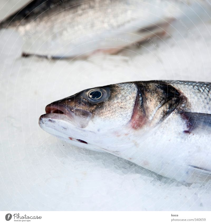 fish Fish Nutrition Fish market Fish mouth Fish eyes Scales Water Animal Dead animal Animal face 2 Delicious Brown Gray Pink Black White Sadness Death Pain