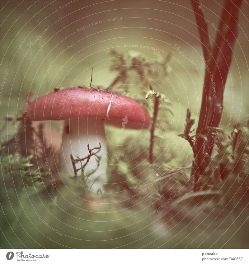story time Nature Plant Elements Earth Summer Forest Bizarre Enchanted forest Fairy tale Playing Childhood memory Mushroom Alluring Fantasy Dwarf Mushroom cap