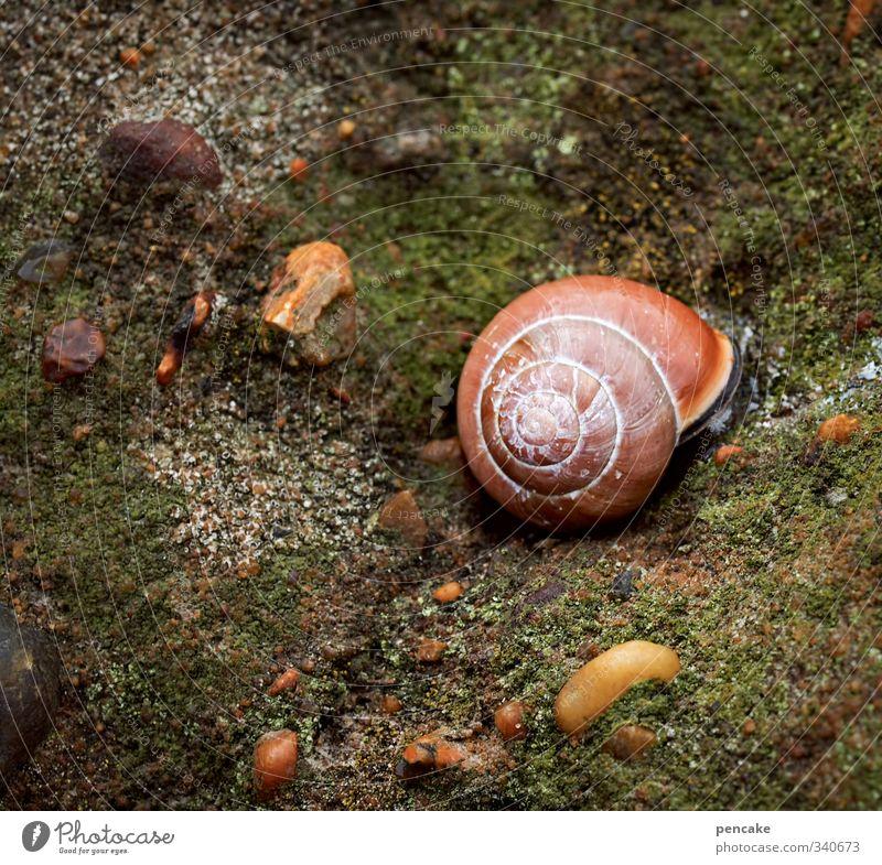 urform by the fjord Nature Animal Elements Water Sign Caution Calm Wisdom Snail Algae Ocean Fjord Limfjord Denmark Green Orange Contrast Snail shell