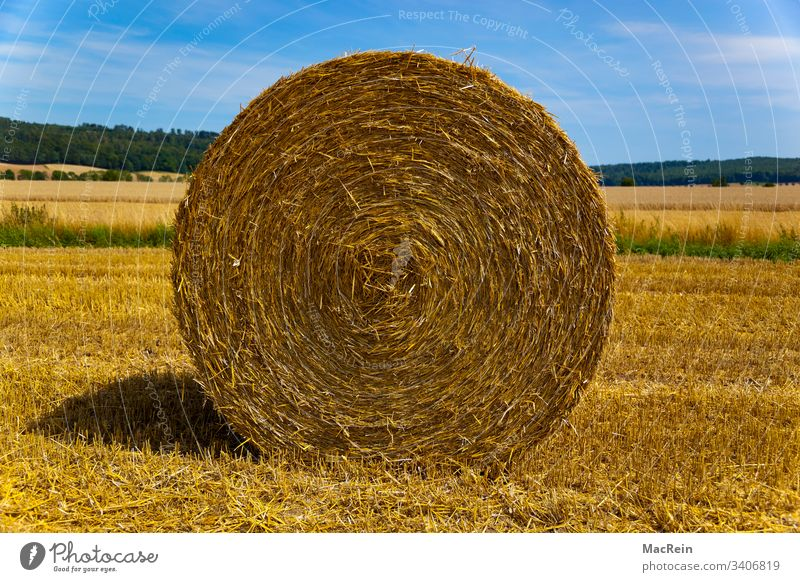 straw bale Bale of straw Round Agriculture out Stubble field Harvest Summer Sky Clouds nobody Copy Space