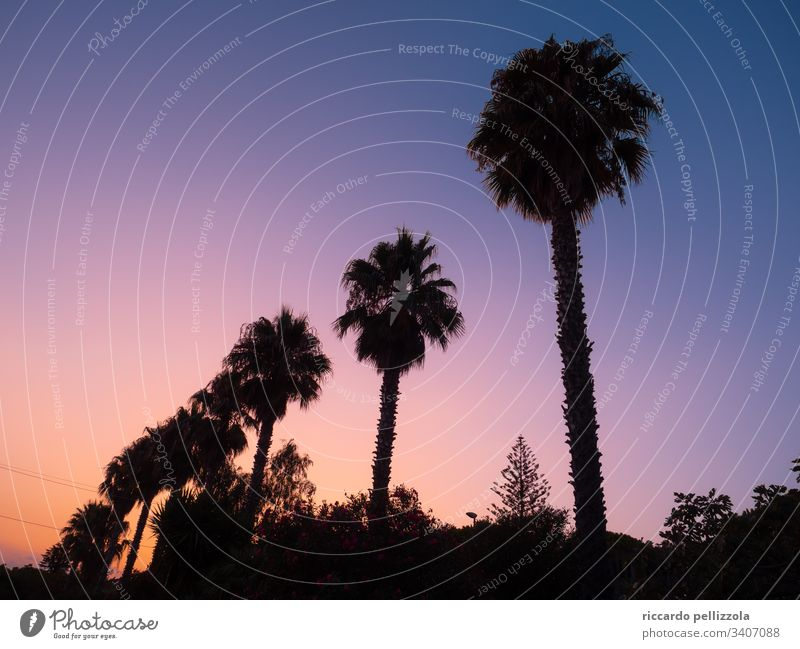 palm trees at sunset Sunset Silhouette Red Purple Evening Blue Sky Shadow Moody melancholy Summer Summertime Colour photo Contrast Light Back-light Landscape