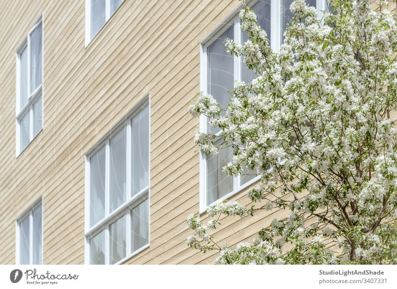Windows of a modern building and blooming tree house facade window windows trees blossom spring branch branches blossoming flowers flowering cherry tree
