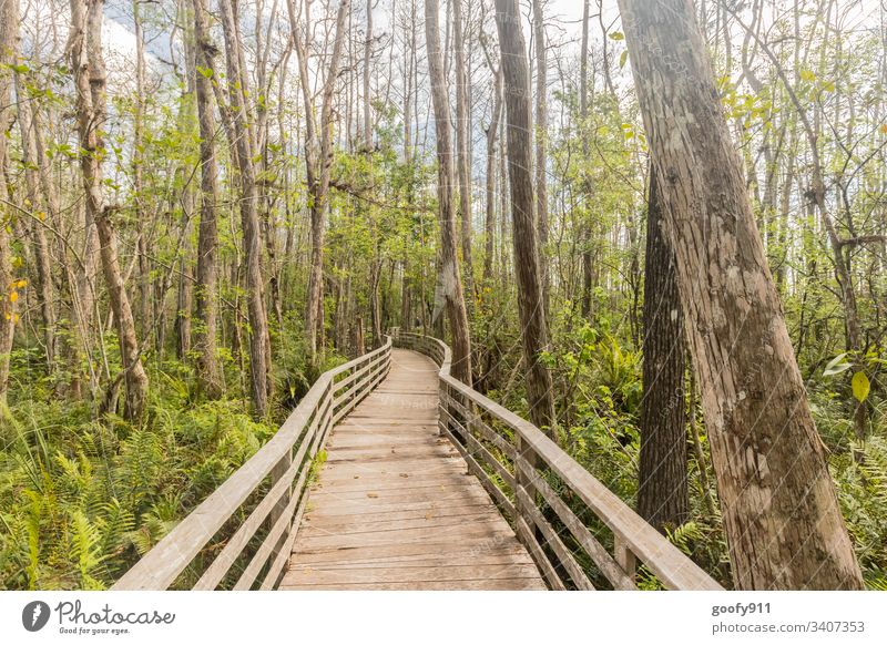 Right in the middle Forest Marsh tree Footbridge Nature Landscape Exterior shot Calm Plant Environment bushes Light green Shadow Colour photo Sunlight Idyll