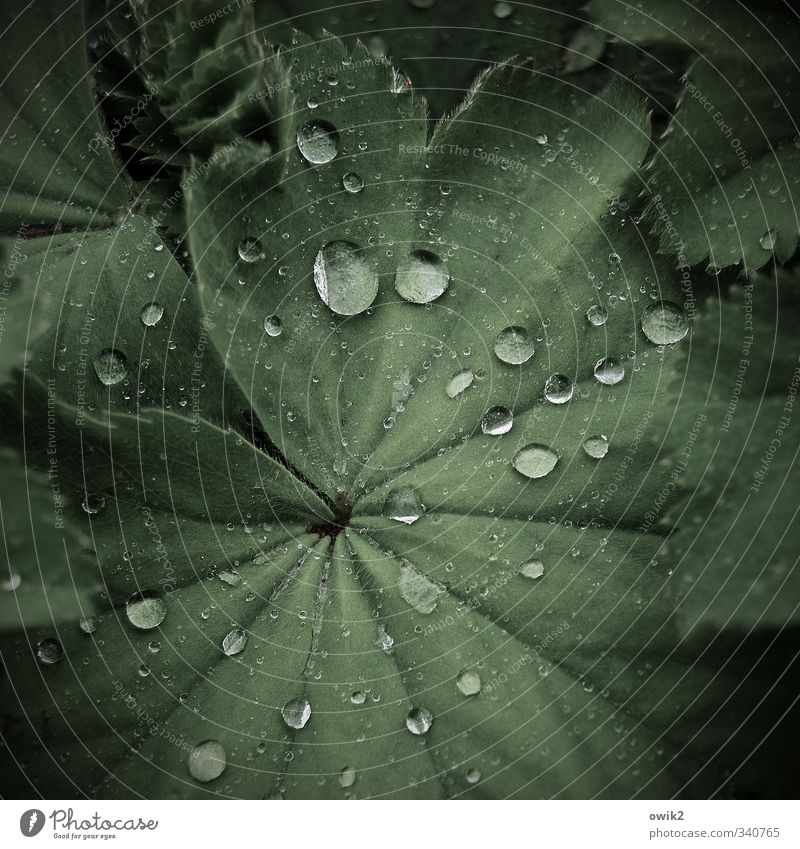 Nature Green Plant Leaf Environment Small Healthy Natural Weather Rain Glittering Climate Fresh Wet Drops of water Many