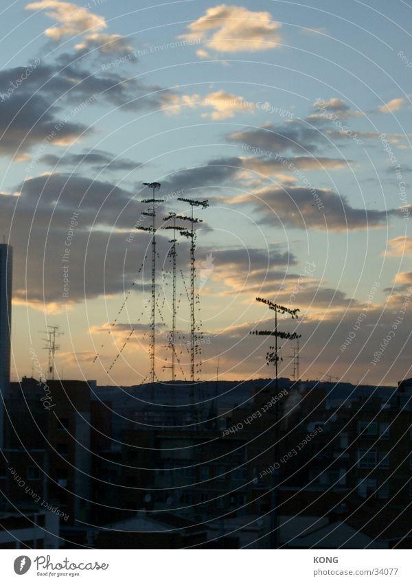 Summer Bird Horizon Vantage point Roof Dusk Antenna