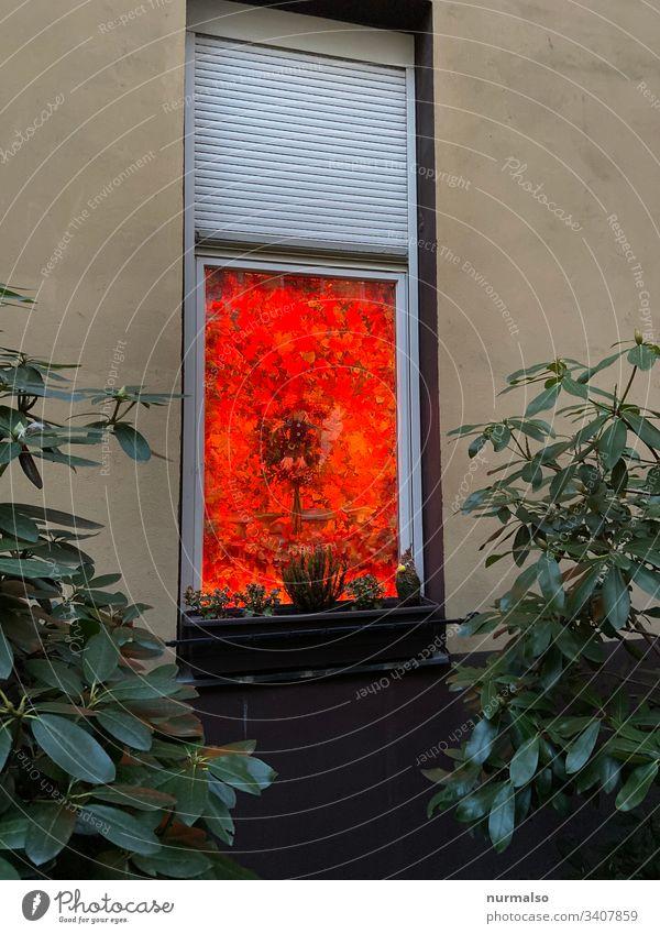 Red window Decoration decoration Window Facade Window box Backyard trash Witch colour flex mystery roller shutter Glass individuality Creativity Life dwell