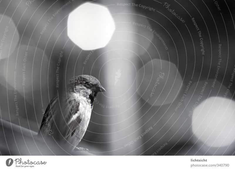 Nature Animal Bird Sit Roof Brash Beak Visual spectacle Sparrow Point of light Eaves Night light City light