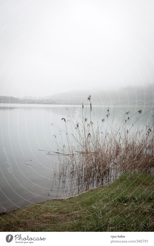 a quiet day at the lake Nature Landscape Water Spring Fog Lake Serene Calm Stagnating To enjoy Common Reed Clean Relaxation Colour photo Exterior shot Deserted