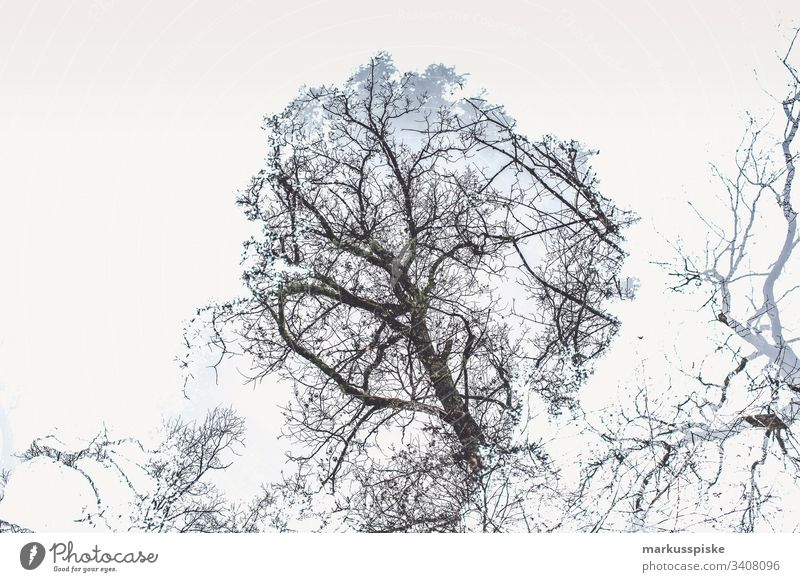 Double exposure deciduous tree Tree trees Contour outline Silhouette