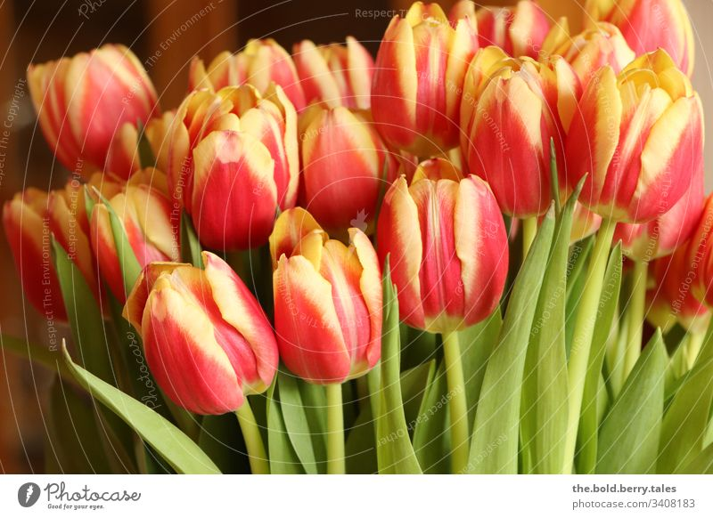Tulips red-yellow Beautiful weather Close-up Natural Nature Growth Blossoming Joie de vivre (Vitality) Happiness Fresh Flower Friendliness Plant Spring