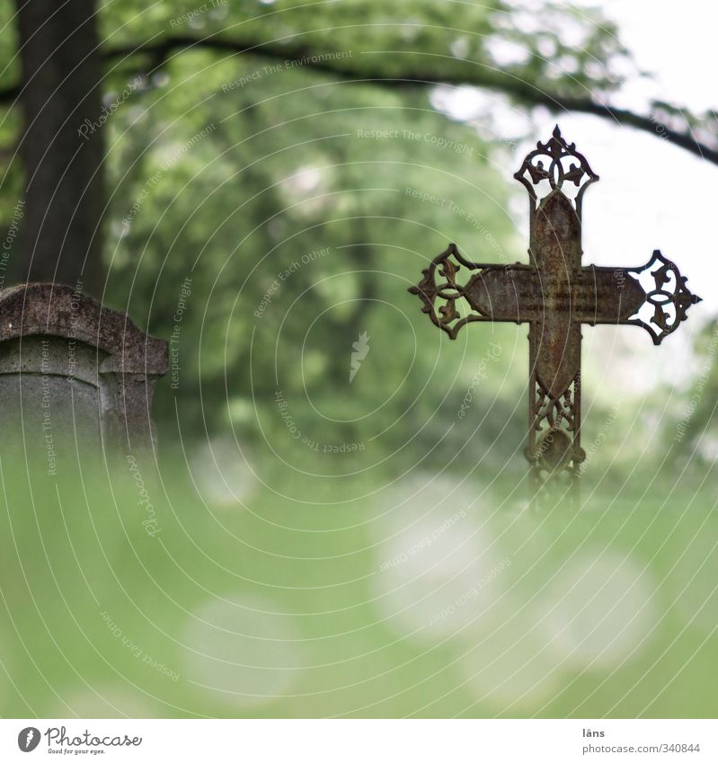 rests here. Environment Landscape Tree Meadow Crucifix To console Calm End Apocalyptic sentiment Eternity Infinity Decline Past Transience Lose Change Cemetery