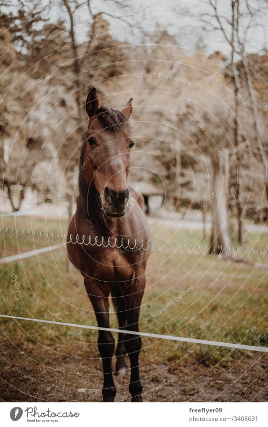 Brown horse waiting on a field stable light equestrian head bay building gate barn window stall ranch boarding harness paddock brown door scene sport inside