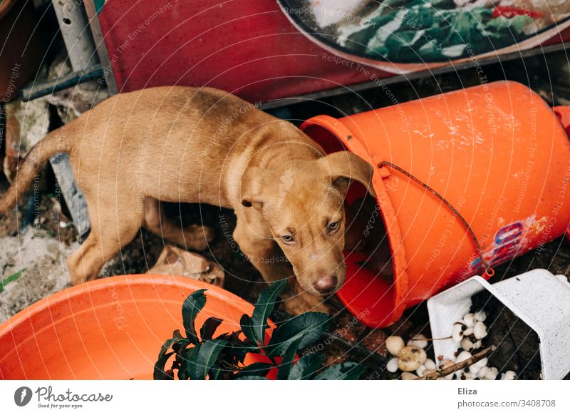 Sad street dog/dog between garbage and junk at the roadside Dog Street dog sad Puppydog eyes Trash Junk Orange bright colours Gaudy Bucket compassion Pet Animal