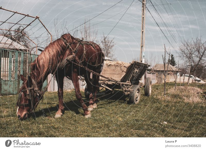 Horse with cart at the countryside horse brown animal domestic grass rustic traditional old wooden pet beautiful mammal Exterior shot Nature Meadow Farm