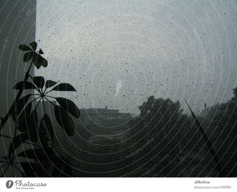 Plant Rain Drops of water Wet Thunder and lightning
