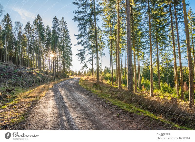 Forest path in the evening light forest path Sunlight Exterior shot Nature Colour photo Deserted Day Beautiful weather Tree Environment Plant Green Light