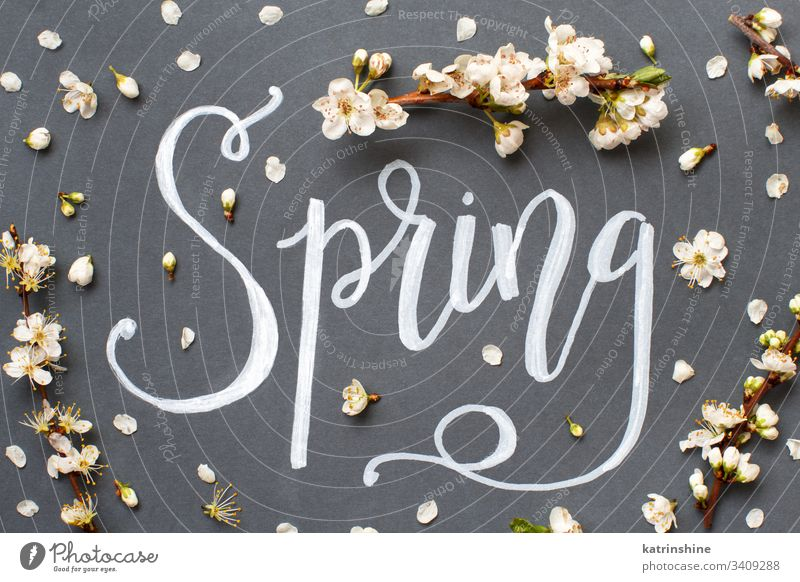 Spring lettering with white flowers on a grey background romantic spring top view cream above text word hand lettering petals buds concept creative day decor