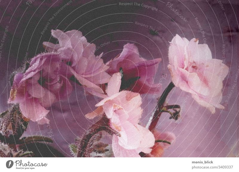 Flowers Fineart Easter Spring Colour variegated Blossom flowers Bouquet'ß Close-up Feasts & Celebrations Colour photo Design Tradition Card Leaf