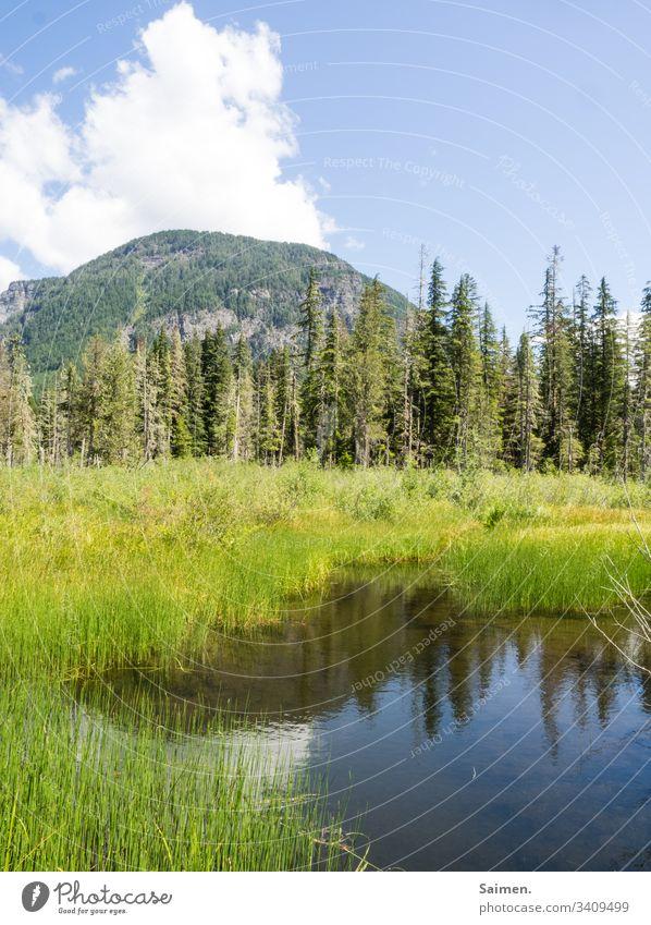 Bergsee Gras See Bäume Landschaft Ausblick Wasser Spiegelung Natur Colour photo Himmel wolken blau grün natürlich Wandern Amerika