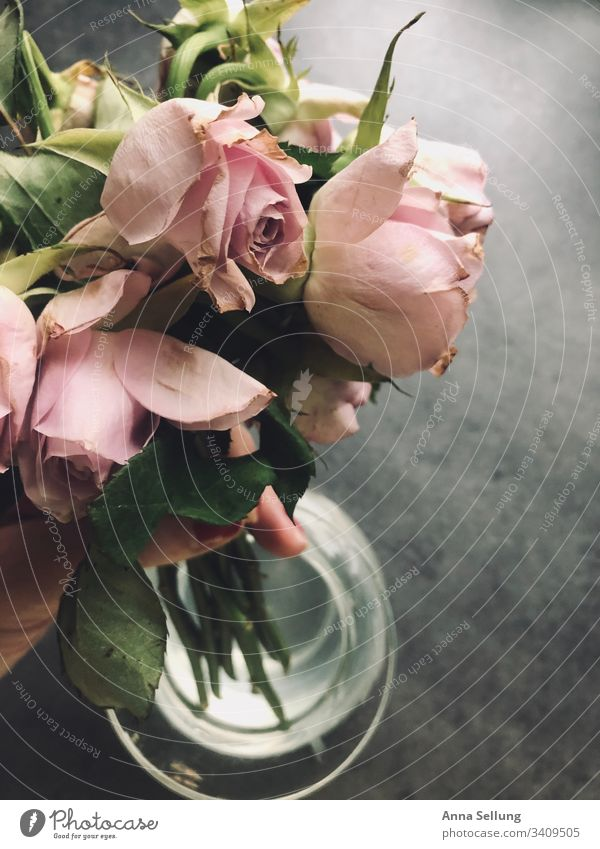 Dried pink roses are taken out of the vase Pink Bouquet Nature Colour photo Decoration Background picture Bird's-eye view Feasts & Celebrations Design Style