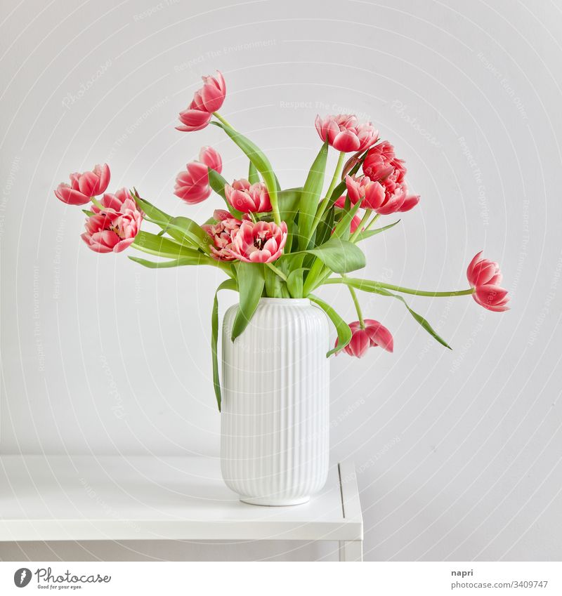 Luxuriant bouquet with stuffed pink tulips in a white vase against a white background Bouquet Spring Red luscious Beautiful Blossoming Vase White Bright Colours