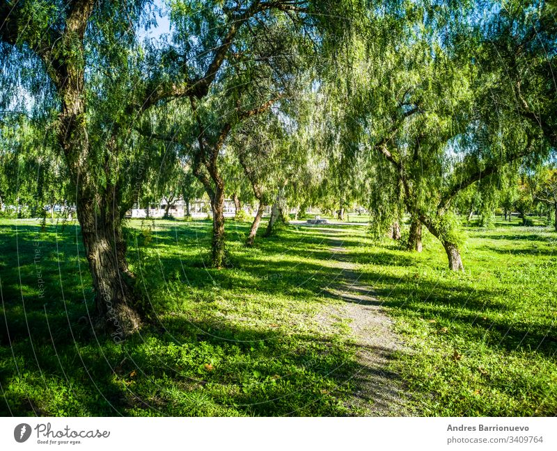 View of very green trees and grass in a park of Puerto de Sagunto countryside springtime land lawn plain crop garden view heavens horizon grassland scene
