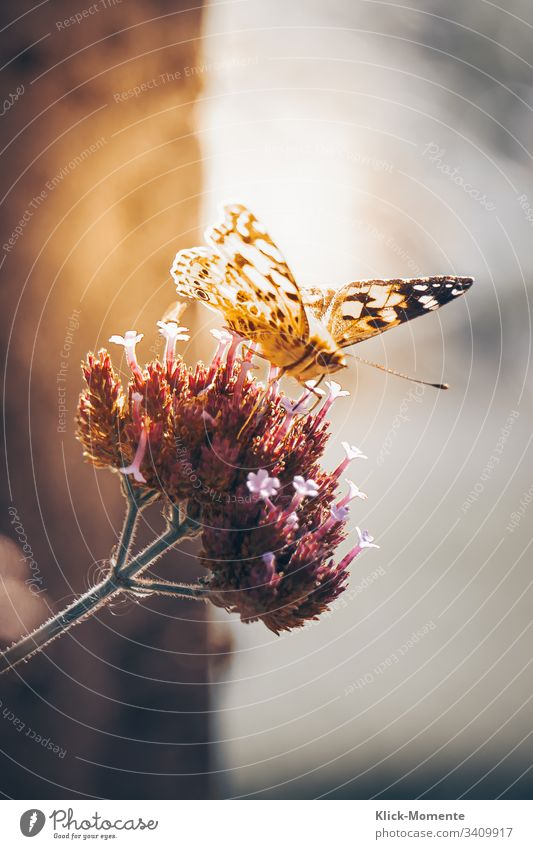 Butterfly on flower, sunning itself and presenting its wonderful wings. #Butterfly #Nature #Folder #Flower #Butterfly #Wings #Robby-and-more