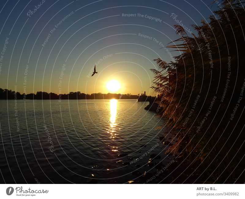 On the Elbe near Lauenburg River Weather Sun Sunset Bird Seagull reed Twilight Evening Water Exterior shot Beautiful weather Colour photo Sunlight reflection