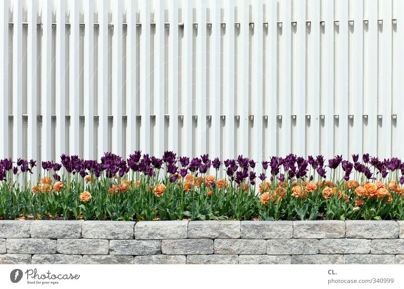 Nature Beautiful Plant Flower Environment Spring Wall (barrier) Stone Garden Orange Park Happiness Many Blossoming Violet Fence