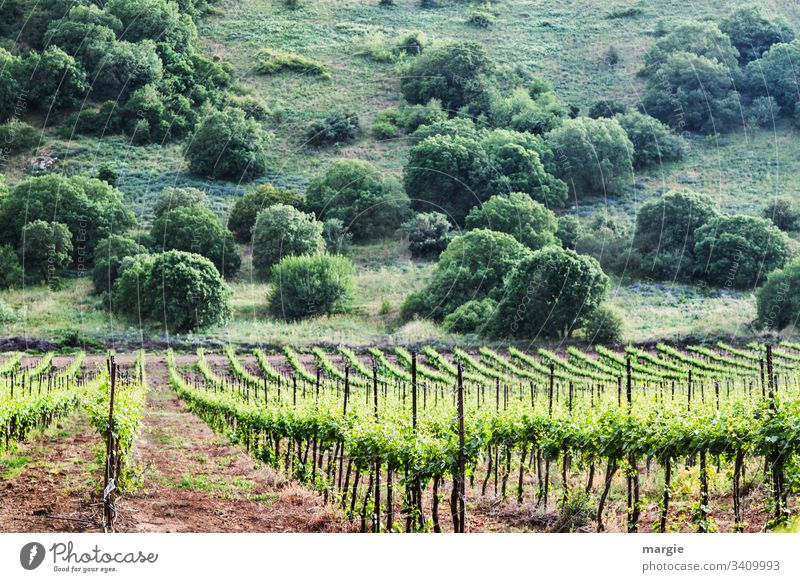 A vineyard, in the background a hill with bushes Vineyard field economy growthstrum vines sustainability Agriculture Organic produce series Arrangement Earth