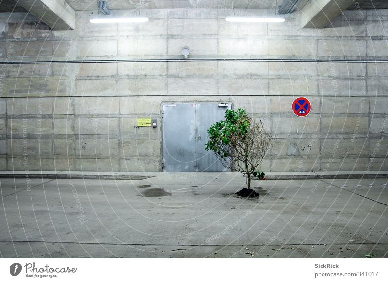 Nature Old Green Plant Tree Wall (building) Architecture Wall (barrier) Gray Earth Growth Concrete Esthetic Blossoming Parking garage To dry up