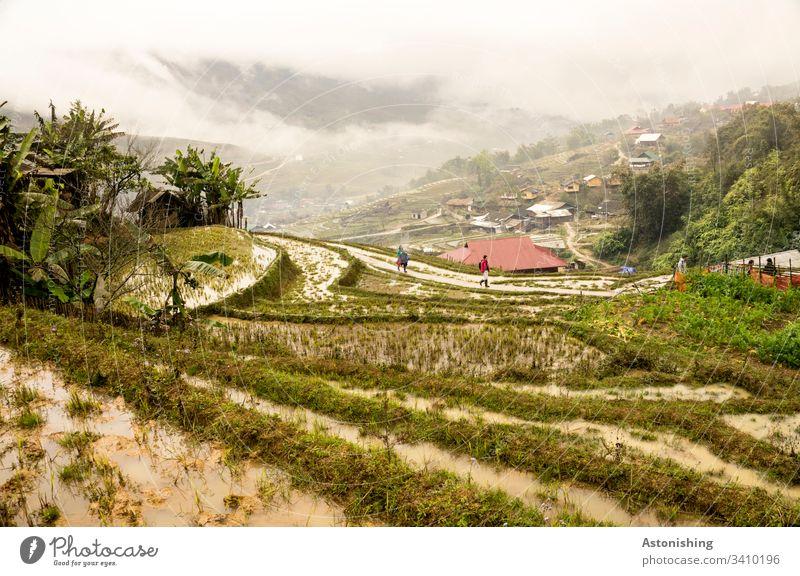 Rice terraces in Sapa, Vietnam Rice Terraces Rice cultivation Nutrition Food Colour photo Asia Wet plants Agriculture lines Fog Weather wet Clouds Valley down