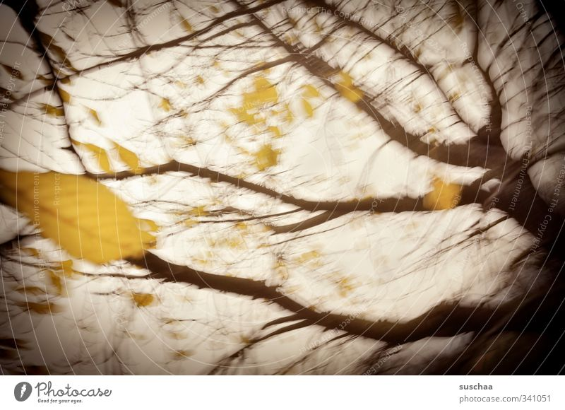 Sky Nature Plant Tree Leaf Yellow Dark Autumn Wood Exceptional Moody Air Brown Weather Climate Elements