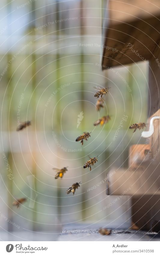 Honey bees fly into the beehive Beehive bee colony Honeybees flight Flying Pollen Nature Bee-keeper Work and employment Insect Farm Colony Human being
