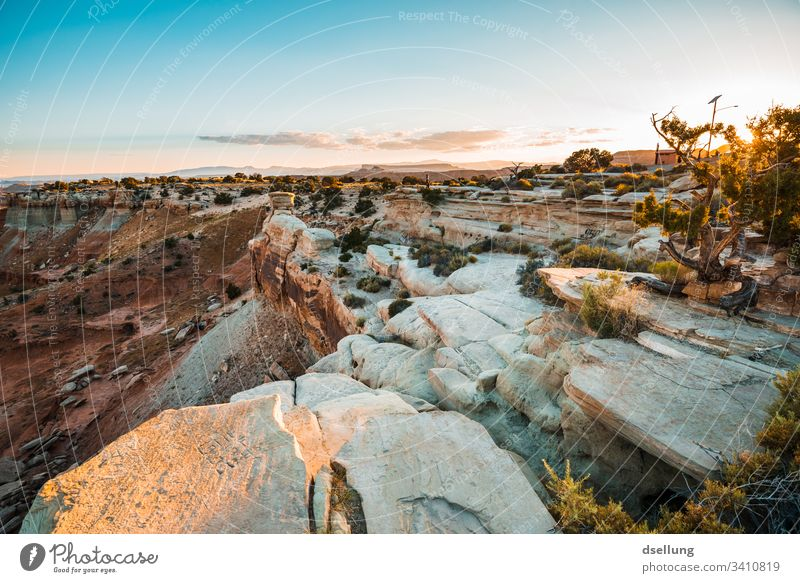 Bushes on rocky ground in low setting evening sun Landscape bushes Evening Evening sun Sunset Sky Clouds Beautiful weather Warmth Contentment Sunrise Nature