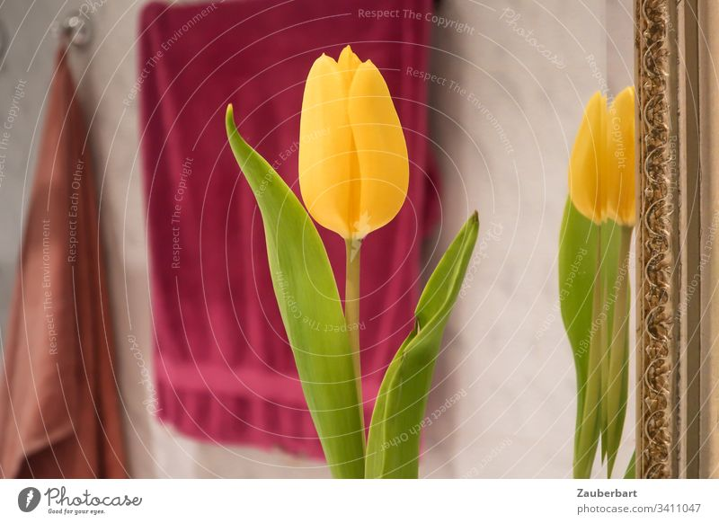 Yellow tulip is reflected in the bathroom mirror with golden frame, behind it towels give color Tulip Mirror reflection Frame Green Gold Red Towels Flower