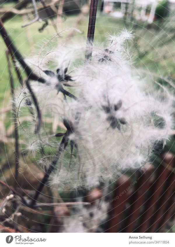 white muddle Part of the plant Brown Botany Close-up Bushes Verdant Nature Exotic Muddled Chaos unusual blurred Plant Environment Structures and shapes Soft Day