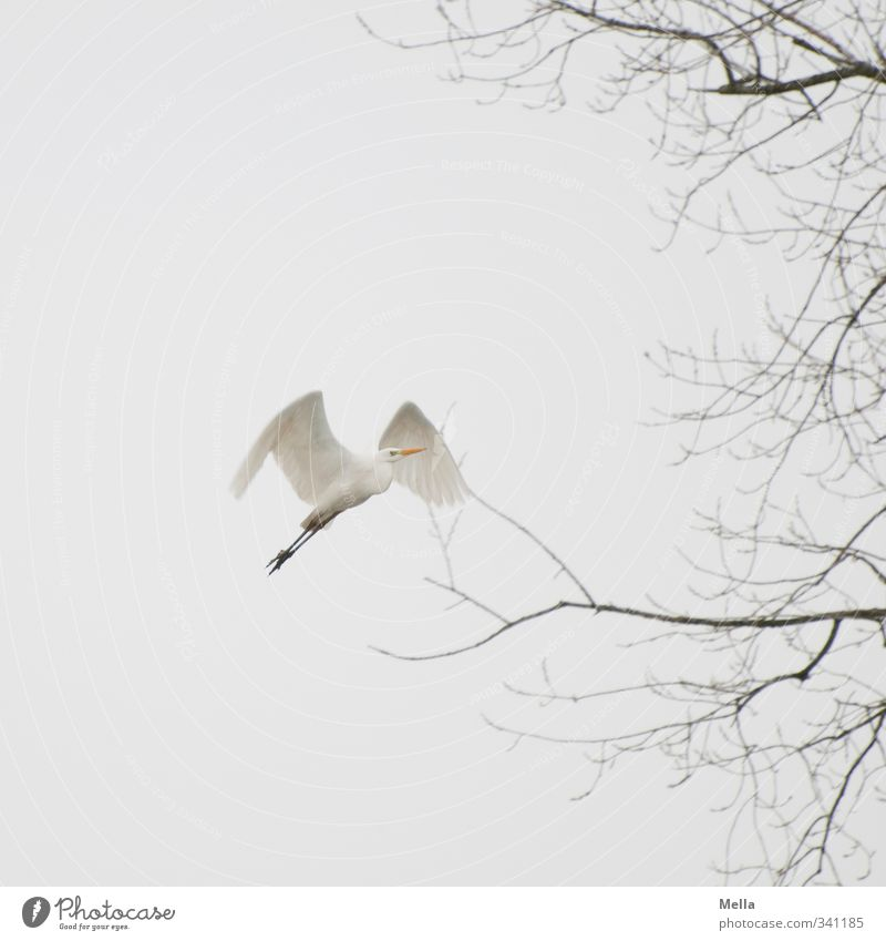 Sky Nature White Plant Tree Animal Winter Environment Autumn Freedom Gray Natural Air Bird Flying Wild animal