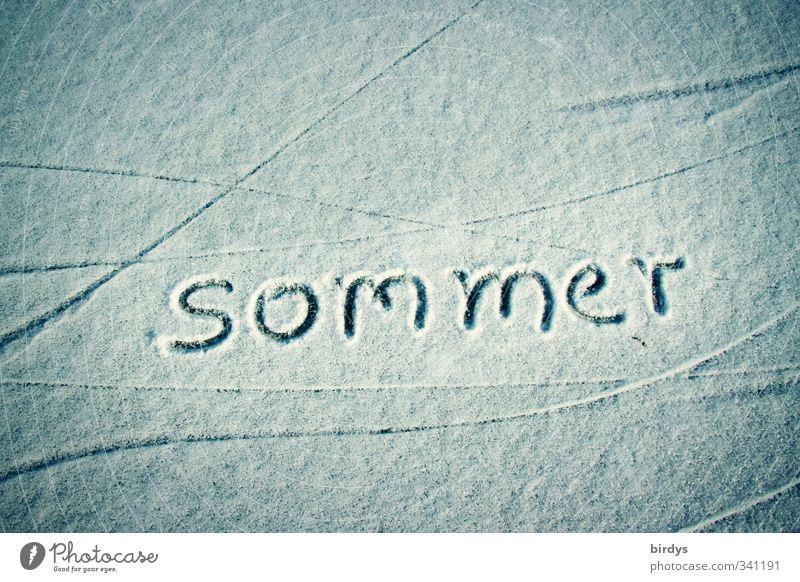 without words Summer Winter Snow Characters Esthetic Exceptional Uniqueness White Longing Cold Environment Line Spirited Climate change Ice Colour photo