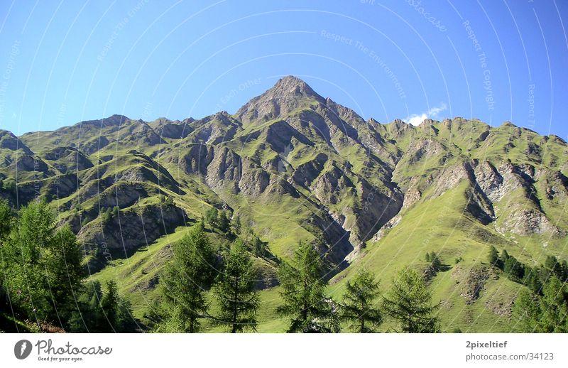 Tree Green Blue Mountain Brown Tall Alps