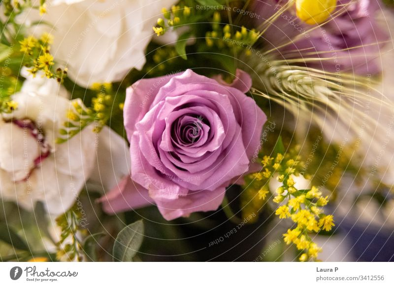 Close up of a purple rose in a bouquet chic florist creative mood cute expensive roses view bright celebration rose bouquet isolated light colorful gift romance