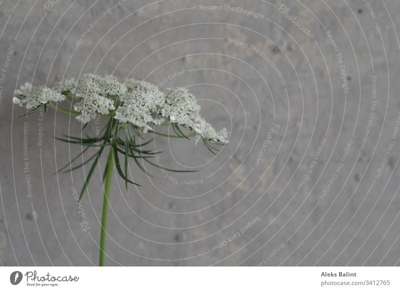 Flower in front of concrete wall Blossom Detail White Spring Green Concrete wall Nature Plant Exterior shot