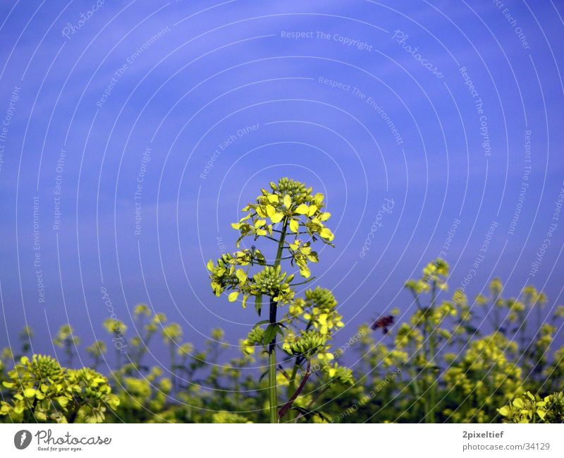Sky Flower Green Blue Yellow Field Insect Bee Beautiful weather