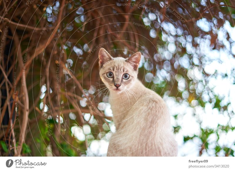 White baby cat in front of a green tree plant summer nobody antique domestic leaf white stone calmness under loll garden shady sunshine bench alfresco serenity