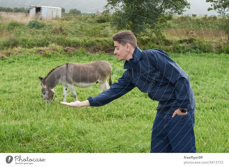 Young man making an optical illusion with a donkey on a grass field farm outdoors food offspring mammal feeding look farm animal cute nature rest green eating