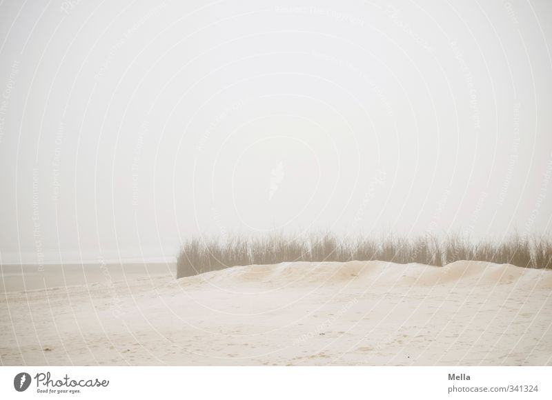 ocean Environment Nature Landscape Sand Sky Fog Plant Grass Coast Beach North Sea Ocean Cold Natural Gloomy Gray Moody Calm Far-off places Haze Empty