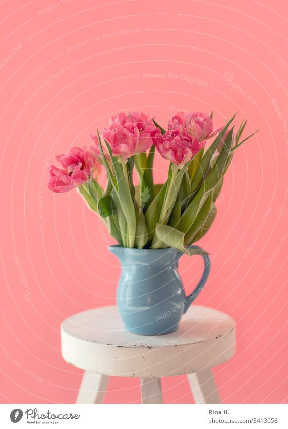 Tulips in a vase tulips flowers Spring Vase window light Still Life Bright Deserted Bouquet pink Colour photo Blossom Blossom leave Ease Decoration