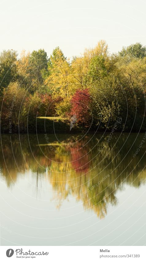 Mirror Environment Nature Landscape Plant Water Summer Autumn Tree Bushes Lakeside Pond Faded To dry up Growth Natural Idyll Decline Transience Time Reflection